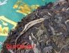 Шен пуэр дикое тысячелетнее дерево