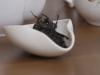 Цзинь Сюань - Огненный цветок